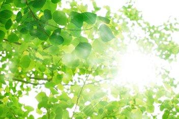 Umweltfreundliche Bauweise (Energieeinsparung)